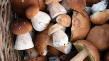 Close-up Of Basket Mushrooms. Mushrooms Boletus Is An Excellent Source Of Healthy Proteins. Selective Focus.