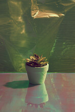 Small Succulent In A Clay Pot