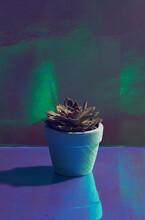 Succulents In A Concrete Pot