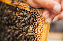 Beekeeper Holds The Beehive