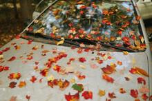 Autumn Windshield