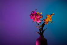 Illuminated Lilium Lancifolium Flowers In Vase