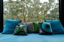 Beautiful Devon Rex Kitten Resting