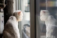 Cat At Window