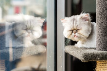 Grumpy Face Cat
