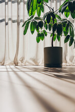 Indoor Potted Plant