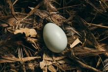 Wild Bird Nest