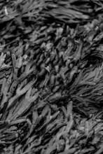 Black And White Seaweed