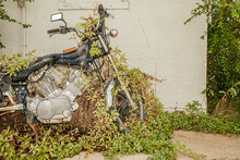 Nature Reclaiming Vehicle