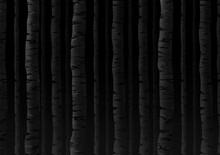 Birch Trees Background. Black And White Illustration