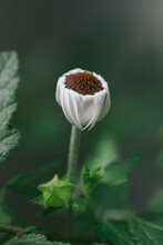 Graceful White Flower With Lowered Petals