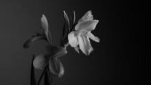 Monochrome Flower.
