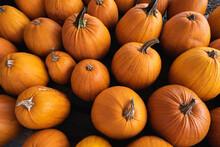 Fresh Pumpkins At New England Farm