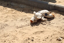 Old Abandoned Children's Toys (doll, Plush Puppy, Giraffe, Foal) On The Sand, On The Playground, On A Sunny Day