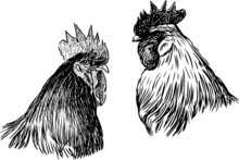 Freehand Drawing Of Two Black And White Farm Roosters