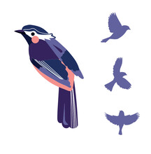 Oiseaux Vectorisé Stylisé