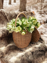 Bouquet Of White Blooming Hellebore Flowers In Wicker Basket In Early Spring In Forest