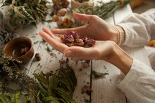 Dried Rosebuds In Women's Palms Bunches Of Dried Medicinal Herbs, Collection Of Medicinal Herbs On A White Wooden Table, Herbal Medicine