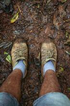 Walking In The Forest / Caminando En El Bosque
