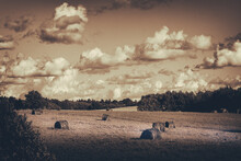 Hay Stacks In Field, Sepia Monochrome Vintage, Beautiful Cloudy Sky, Old Photo