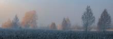 Morning Mist Over Swamp