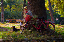 Abandoned Red Bike Leaning On Big Old Tree Decorated And Used To Carry Flowerpots With Green And Cyan Plants. Dog Laying Next To Red Bike With Bench Behind It. Park Decoration.