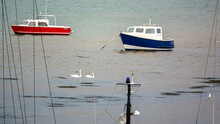 Two White Swans Swim In Front Of A Moored Boat At Penrhyn Dock, Bangor Wales UK