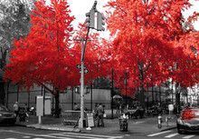 Colorful Red Fall Trees In Black And White Landscape Scene In The Soho Neighborhood Of New York City