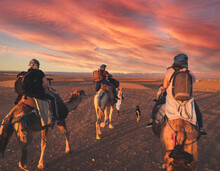 Rear View Of Tourists Riding Camels In Sahara