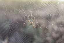 Spider In The Center Of The Web Close-up