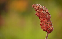 Close Up Of A Red Seed Pod With A Colorful Background