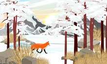 The Red Fox Vulpes Vulpes Runs Through The Mountain Valley In Winter At Sunrise. Large Stones, Dry Grass And Tall Pine Trees Covered With Snow. Realistic Vector Landscape
