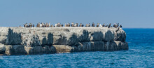 Cormorants Sitting On The Pier