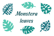 Monstera Tropical Leaves Set, Green Turquoise Color Vector