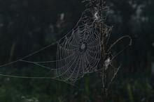 Dewy Spider Web On Dry Tall Grass Against A Dark Background