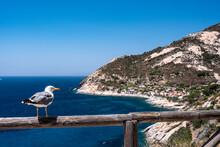 Isola D'Elba, Gabbiano