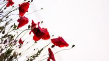 Flower Wallpaper, Aesthetic Nature Image Background