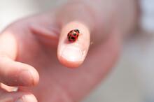 てんとう虫を親指にのせた手