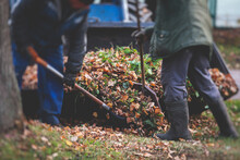 Removing Fallen Autumn Leaves In The Park, Process Of Raking And Cleaning The Area From Yellow Leaves, Regular Seasonal Work With Tractor, Garden Tools And Modern Equipment
