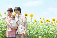 ひまわり畑と笑顔の家族3人
