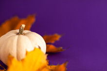 Close Up Of Decoration White Small Halloween Pumpkin And Yellow Orange Leaves On Vibrant Purple Blurred Background With Copy Space. Holiday Autumn Concept.