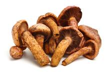 Boletus Mushrooms On White Background