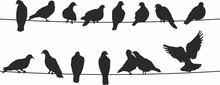 Vector Silhouettes Of Birds. Doves On Wires. Shadows Of Seated And Flying Birds.