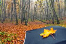 Yellow Autumn Leaf On An Umbrella