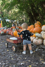 Toddler Girl Pushing A Wagon At A Pumpkin Patch; Pumpkins Stacked Up On Pallets In Background