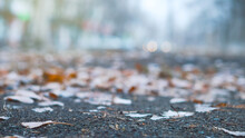 Fallen Leaves Lie On Wet Ground. Thin Snow Covers The Ground. Change Seasons Concept.