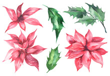 Watercolor Floral Collection With Christmas Red Flowers And Green Leaves. Floral Collection Perfect For Spring Greeting Cards, Invitation, Cards And More. High Quality Illustration