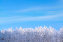 Treetops, Branches In Frost, Snow Against A Blue Sky With Clouds On A Sunny Frosty Day. Beautiful Winter Background With A Copy Of The Space.