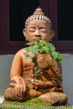 Terracotta Statue Of Buddha Sitting In Lotus Pose And Holding A Ficus Religiosa Or Bodhi Tree Bonsai In His Hand At Wat Phra Singh Buddhist Temple, Chiang Mai, Thailand