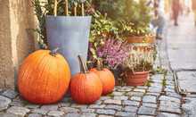 Thanksgiving Decor Of Ripe Orange Pumpkins And Flowers In Flowerpots And Floral Pots At Street On Paving Stones.